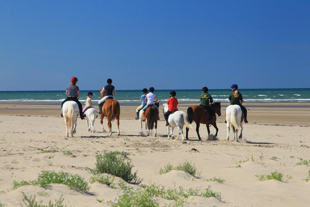 Ponies on Beach Cardigan Bay ©Janet Baxter