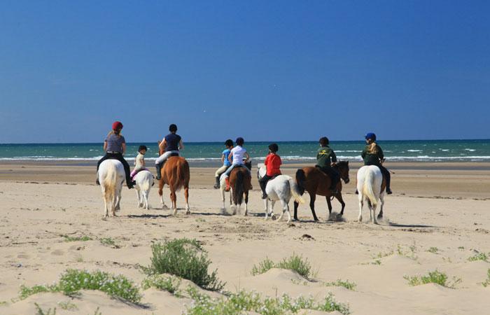 ponies-on-beach